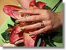 Manicure dłoni